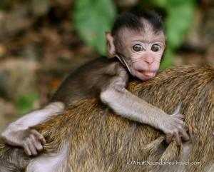 Batu Cave Monkeys