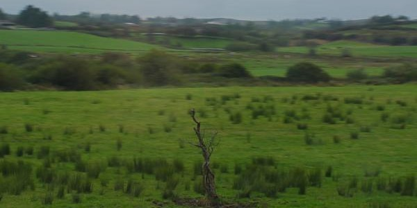 Remains of Fairy Tree Near Limerick