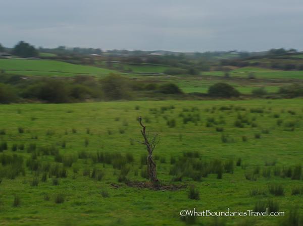 Remains of Fairy Tree Near Limerick