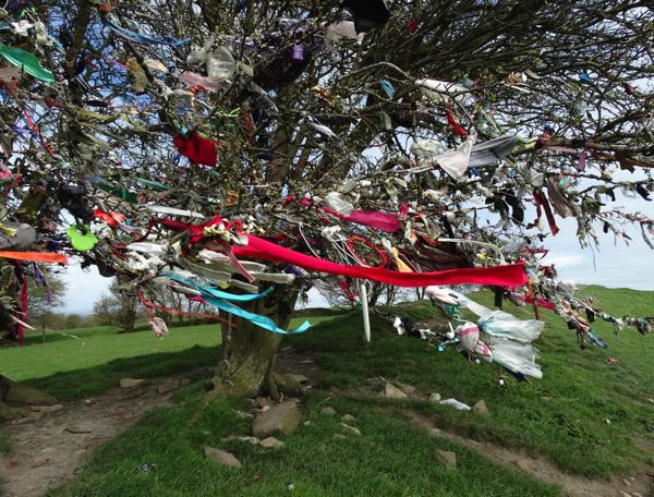 Fairy Tree ribbons