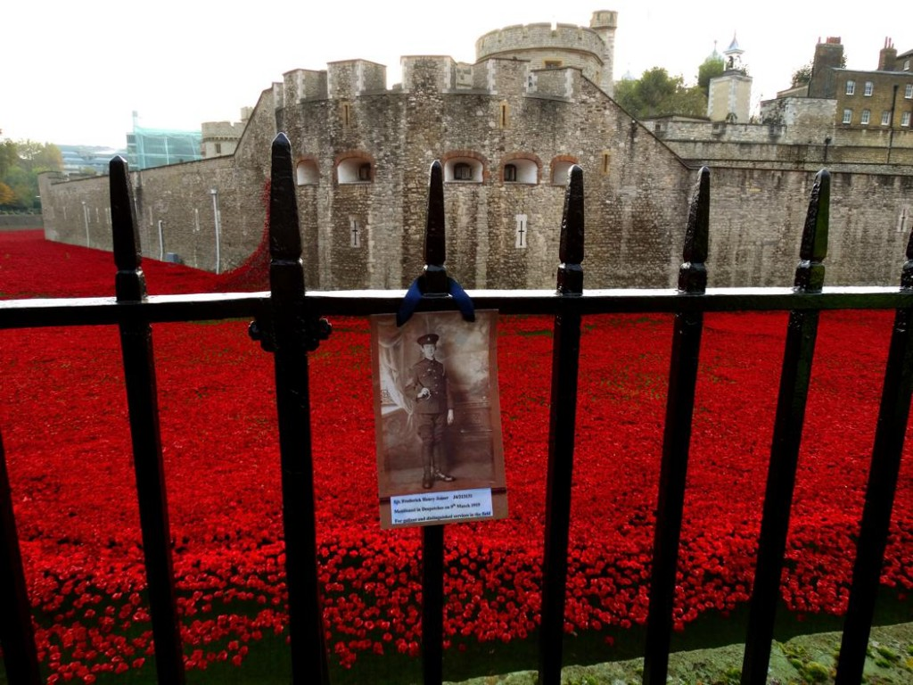 Tower of London Poppies Field Poppies at Tower of London