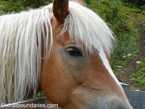 Wild Horse 2 CR