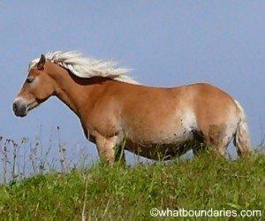 Wild Horse CR