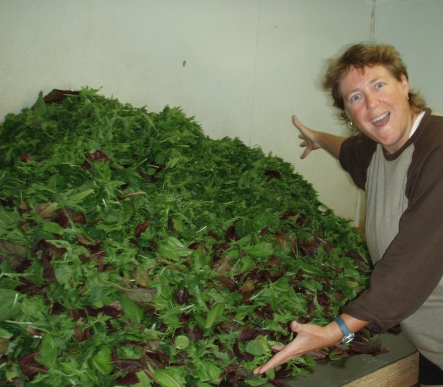 Look at all this lettuce!