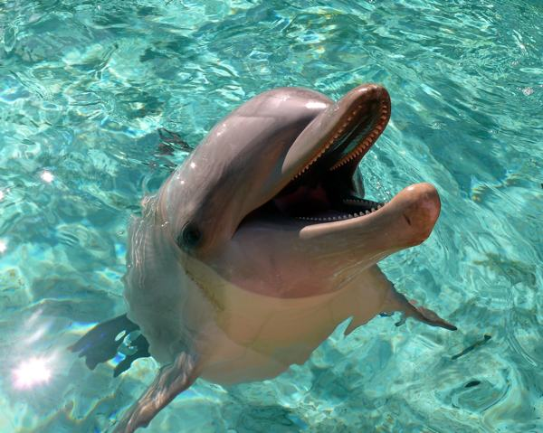 Smiling Dolphins