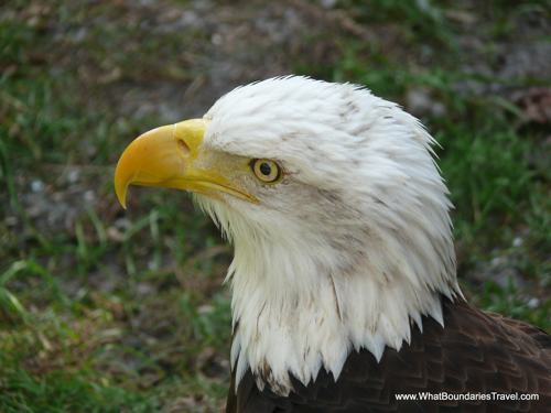 Eagle Side