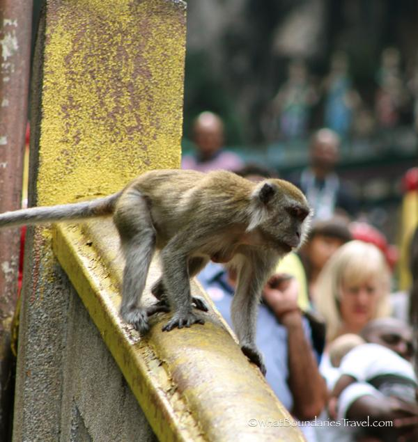Batu Monkeys