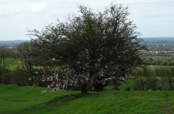 Fairy Tree of Tara