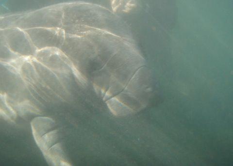 Flipper scratch