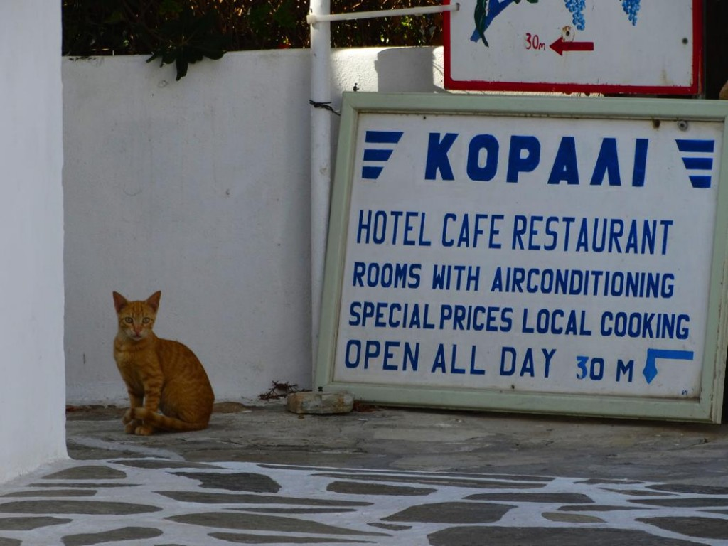 Greek Cats
