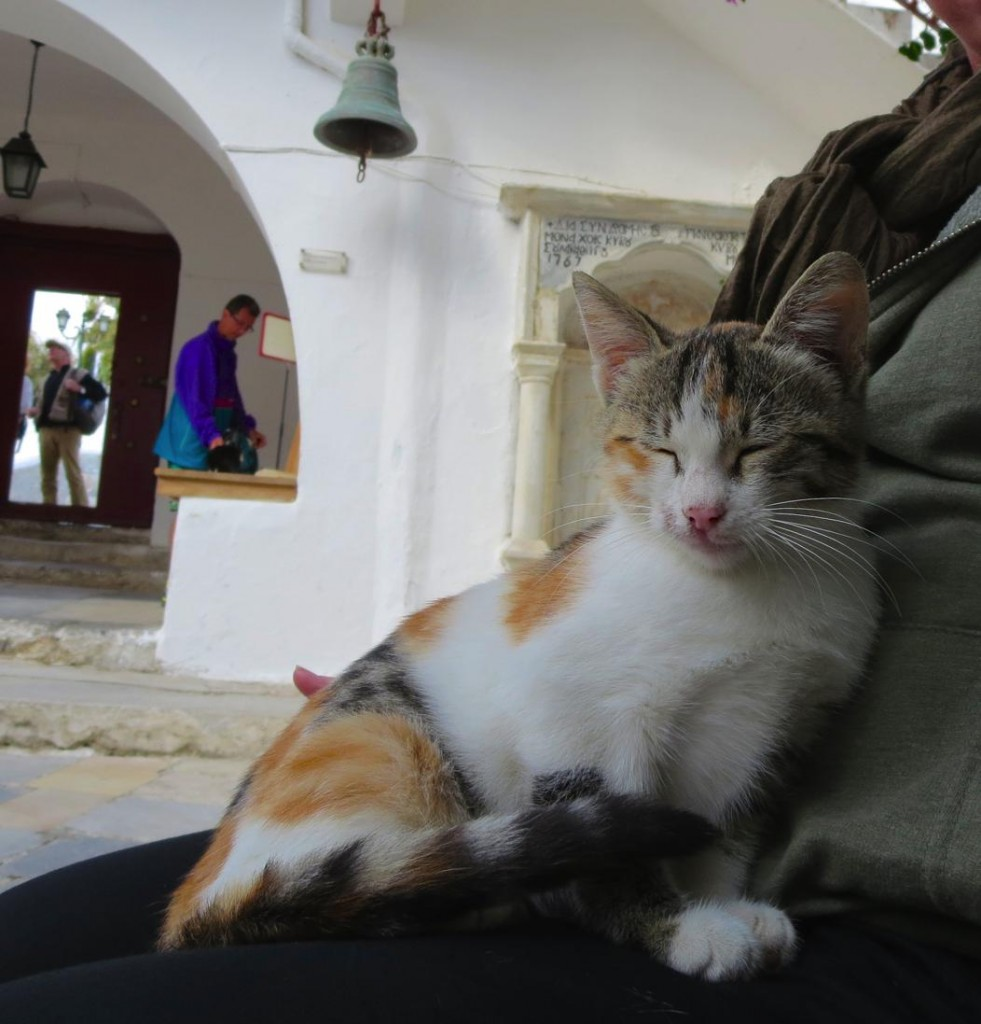 greek cats-0010