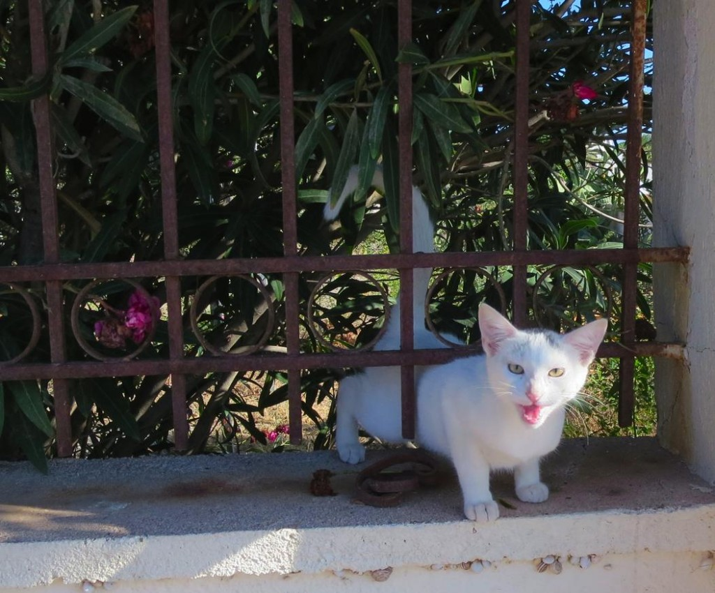 greek cats-0018