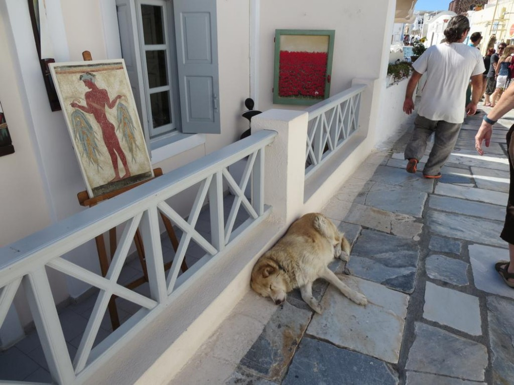 greek cats-0019