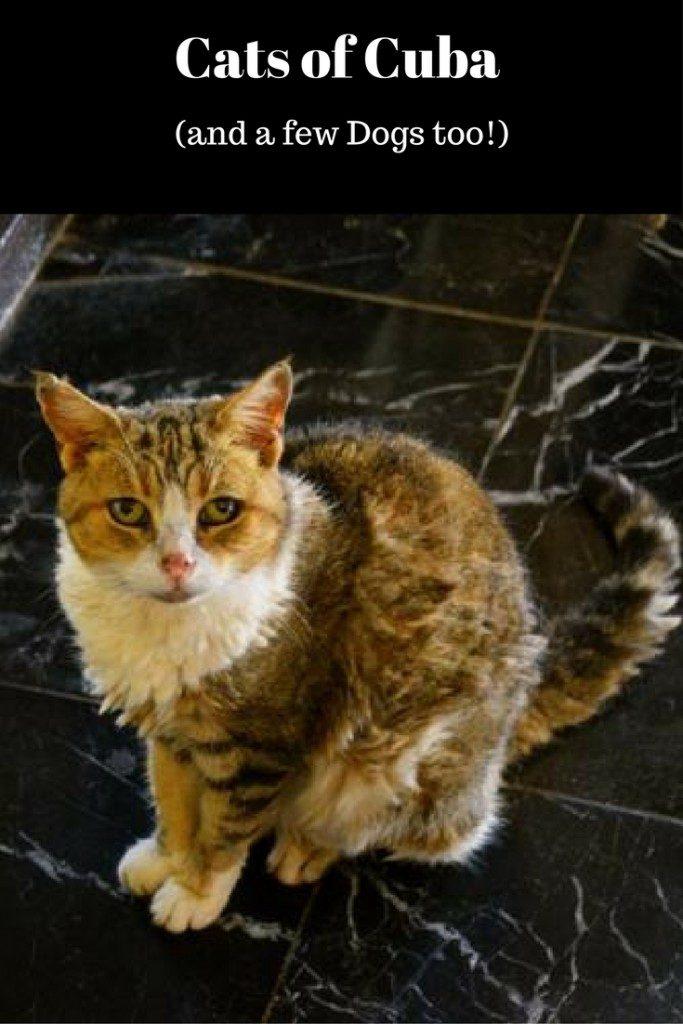 Cuba Cats
