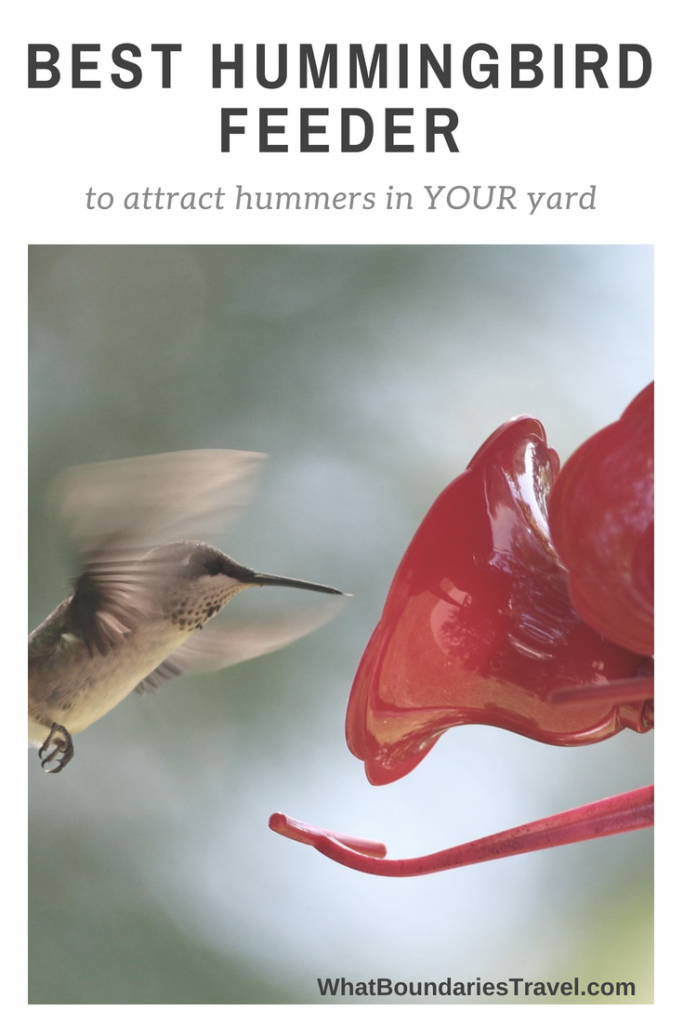 Best Hummingbird Feeder