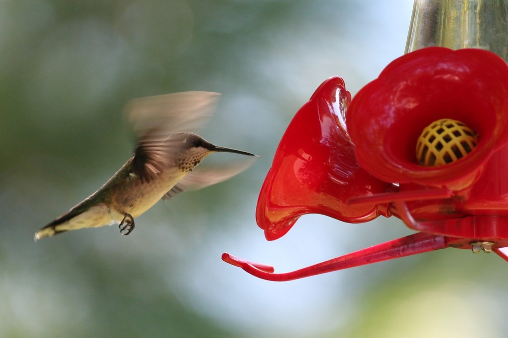Best Hummingbird Feeder for Attracting Colorful Hummers to Your Yard